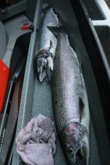 Oregon steelhead fishing guide