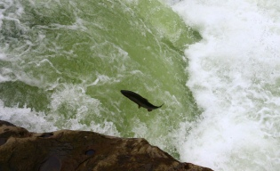 steelhead fishing guide