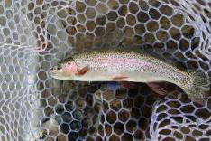 Willamette river rainbow