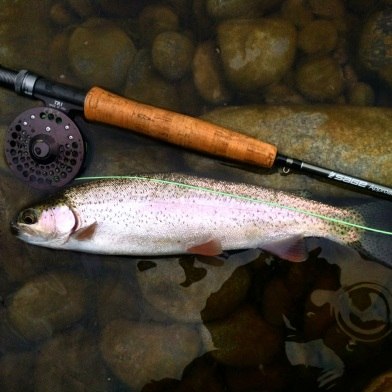 Fishing Guide, Fly fishing, fly fishing guide, willamette river fishing guide,