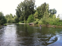 Oregon fly fishing, Willamette river trout fishing, willamette river guide,